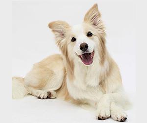 着飾る恋の犬のプロフィール