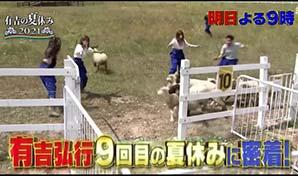 有吉の夏休み2021「羊の追い込み」