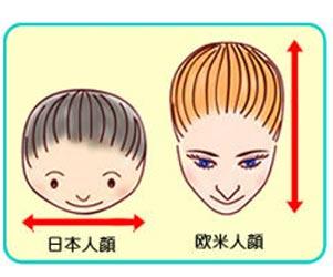 日本人と欧米人の頭の比較